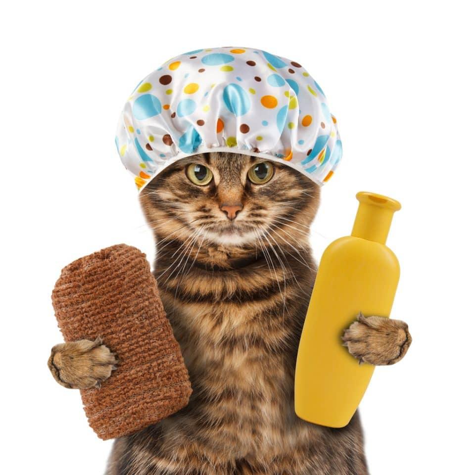 фото кота в шапочке для душа громкой победы